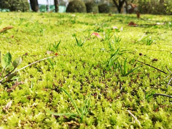 苔庭のススメ
