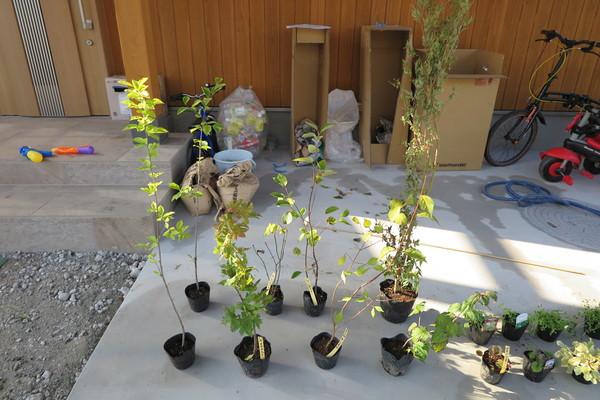 -庭造りことはじめ その6- 色んな植物
