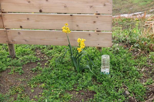 庭造りことはじめ その11 -春の便り-