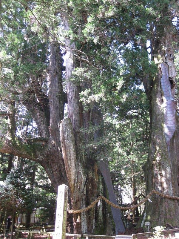 病害虫に強い木、その理由